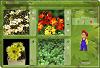 Botāniskās spēles 1.variants